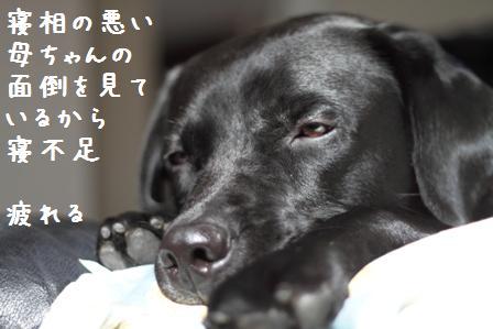 004-20101027-004.jpg