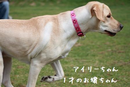 010-20101010-003.jpg