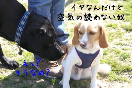20100314-09.jpg