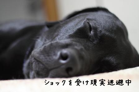 20100527-01.jpg