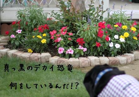 20100709-04.jpg