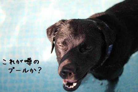 20100721-08-08.jpg