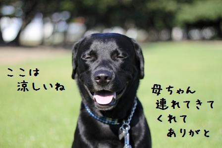 20100727-006.jpg