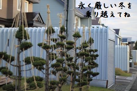 20101117-003.jpg