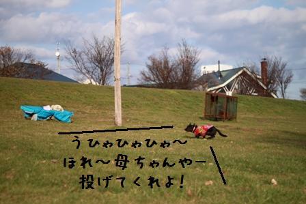 20101120-007.jpg