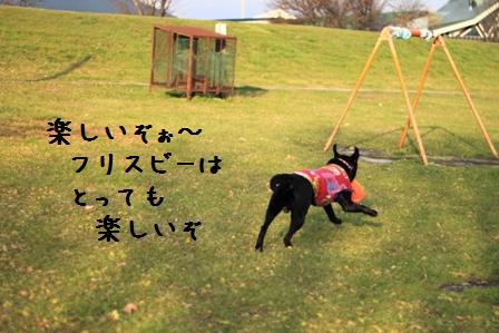 20101120-008.jpg
