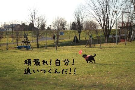 20101120-009.jpg