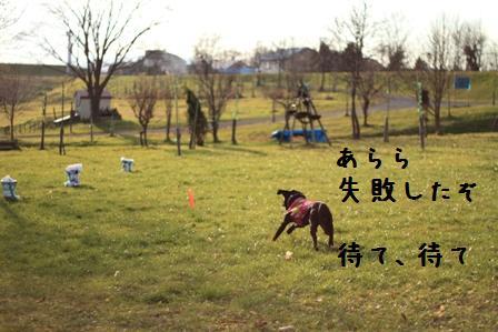 20101120-010.jpg