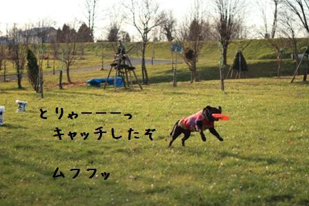 20101120-011.jpg