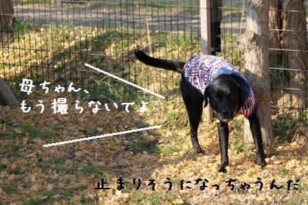 20101121-011.jpg