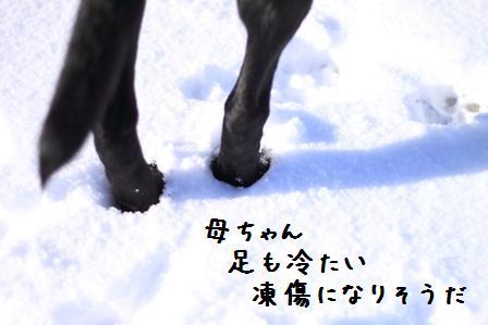 20101130-005.jpg