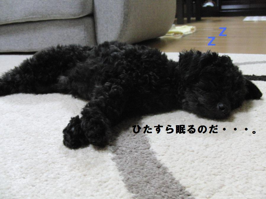 002_20100927105943.jpg