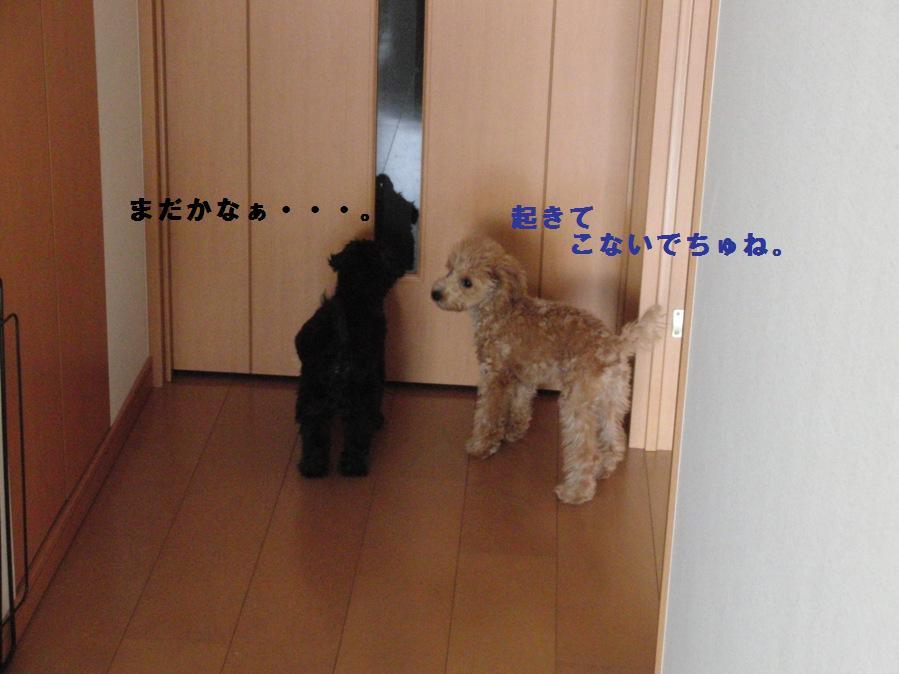 009_20101004100156.jpg