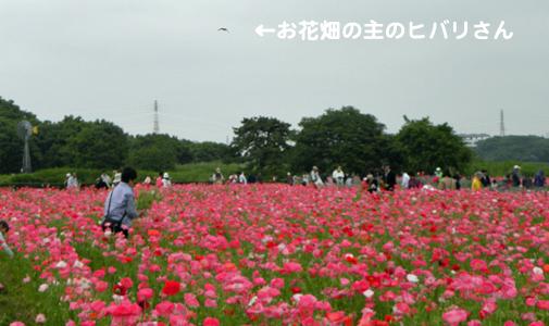 201005-5351.jpg