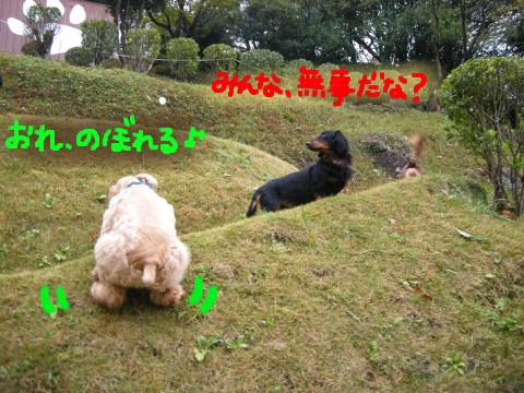 「悩み多きボス犬」テトラ様、見回りに忙しくて、おちおち走ってられません。