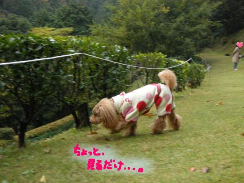やめなさい、りんちゃん.犬には向き不向きってもんがあるんだから.