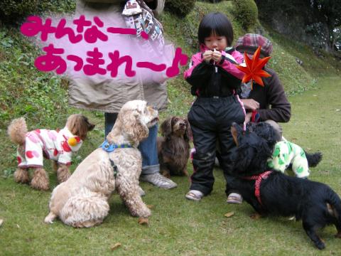 鵜飼いならぬ、犬飼いのさーちゃん.5匹とも個性的にガン見してますな.