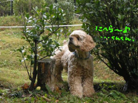 柄にもなく、雨上がりの緑の香りを楽しむ的なむー…似合わなーい!