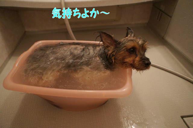 いい湯だな♪~