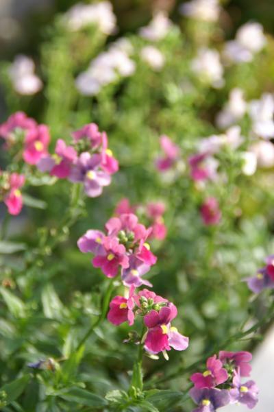 ベランダ 花