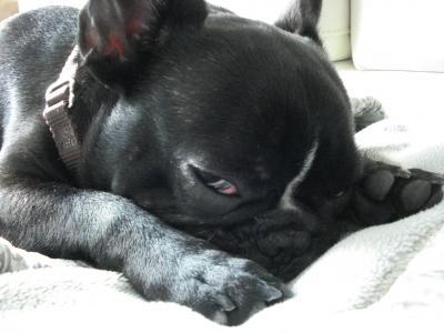 寝ますからね...Zzzz...