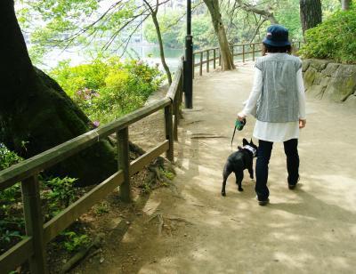 池の畔を歩きます