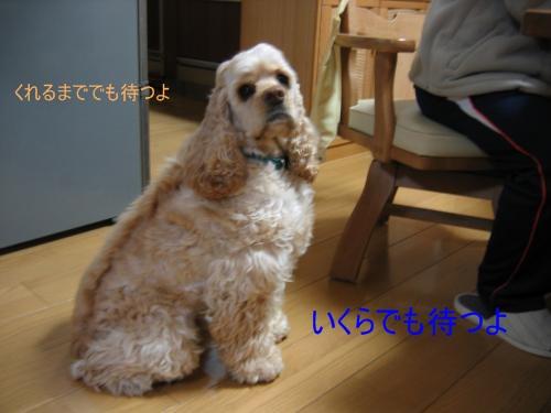 003_convert_20100208210818.jpg