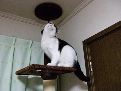 美猫・・・