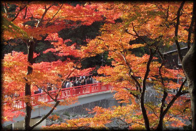 香嵐渓・吊り橋1