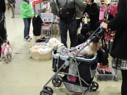 小型犬がいっぱい セール品もいっぱい.JPG