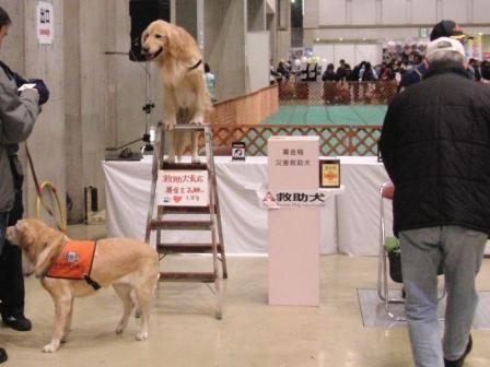 ロンがなれそうなのは救助犬.JPG