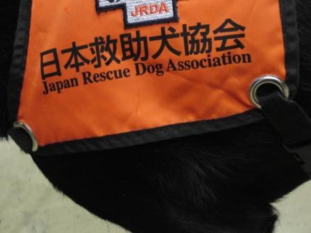 黒ラブの救助犬.JPG