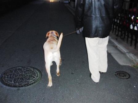 お散歩だ~.JPG