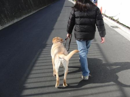 2ロン姉の歩行訓練.JPG