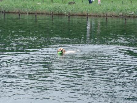 1いつものように泳いでいると.JPG