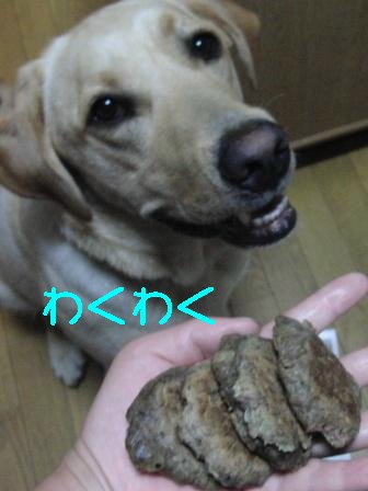 わくわく_sh01.JPG