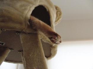 n猫足のオモチャ.JPG