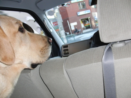 01お車でドライブ♪.JPG