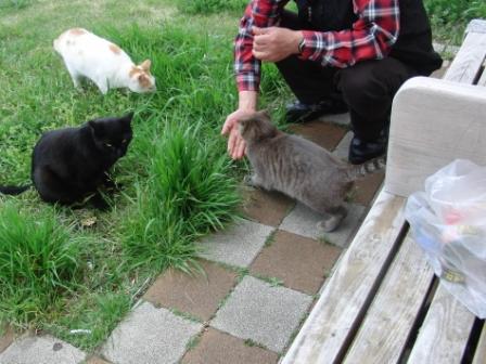 野良猫に餌?.JPG