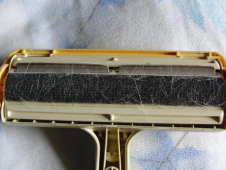 CIMG8530.JPG
