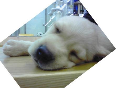 lifeximg_20110823023619.jpg