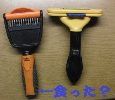 CIMG2903.JPG