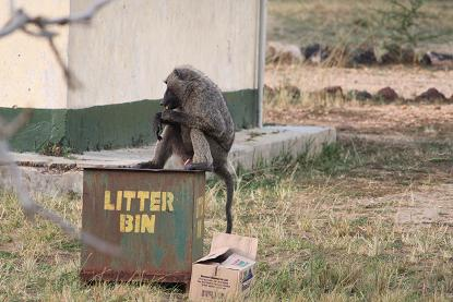 ゴミ上サル