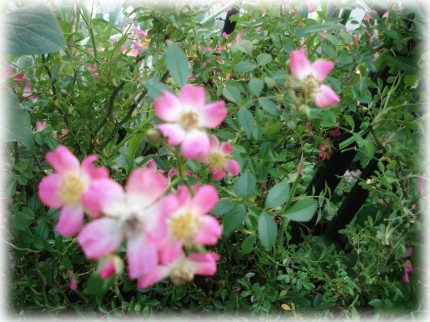 Pink Spray (4)