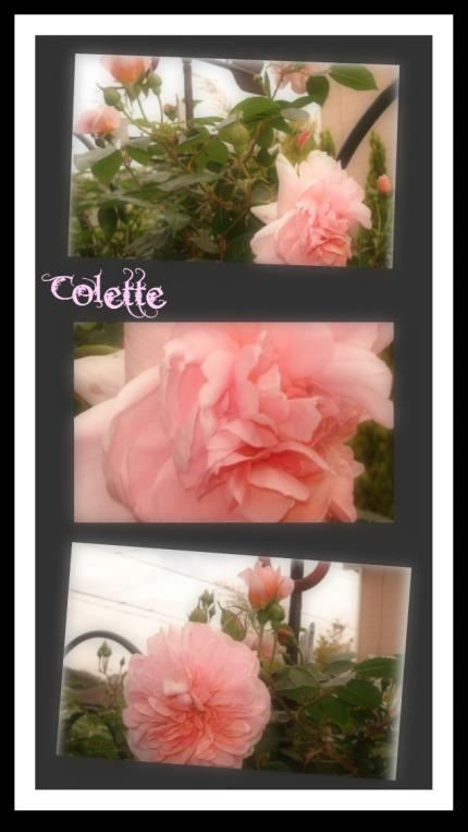 Colette5.jpg