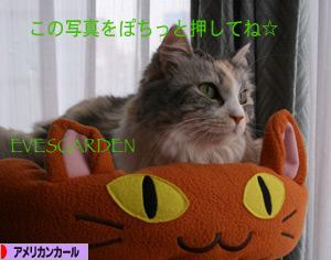 091209pochi.jpg