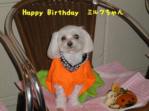 HappyBirthdayミルクちゃん