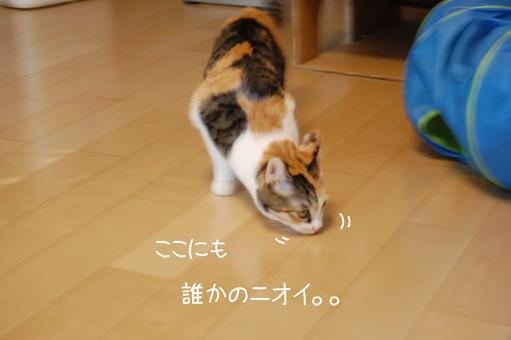 DSC_0006_20101006005551.jpg