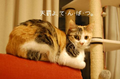 DSC_0011_20100329224854.jpg