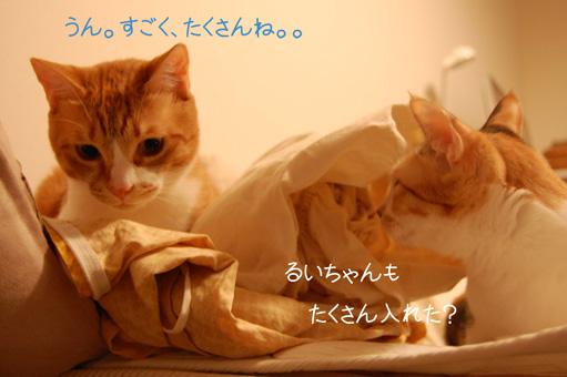 DSC_0028_20100504215640.jpg